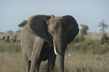 Foto 05 - Tanzania: Big Five