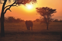 Bild 01 - Tanzania: Big Five