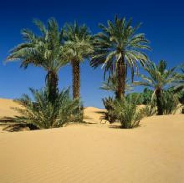 lehmstadt bei marrakesch
